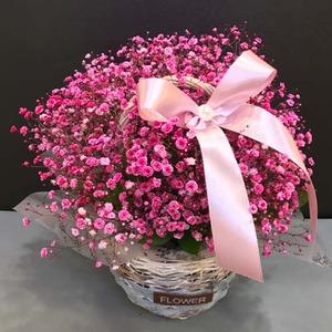 핑크안개 꽃바구니